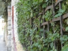 Wrought iron fence - Casa Barbey, La Garriga