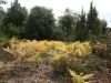 La Calma - Walk from Montseny to Taganament