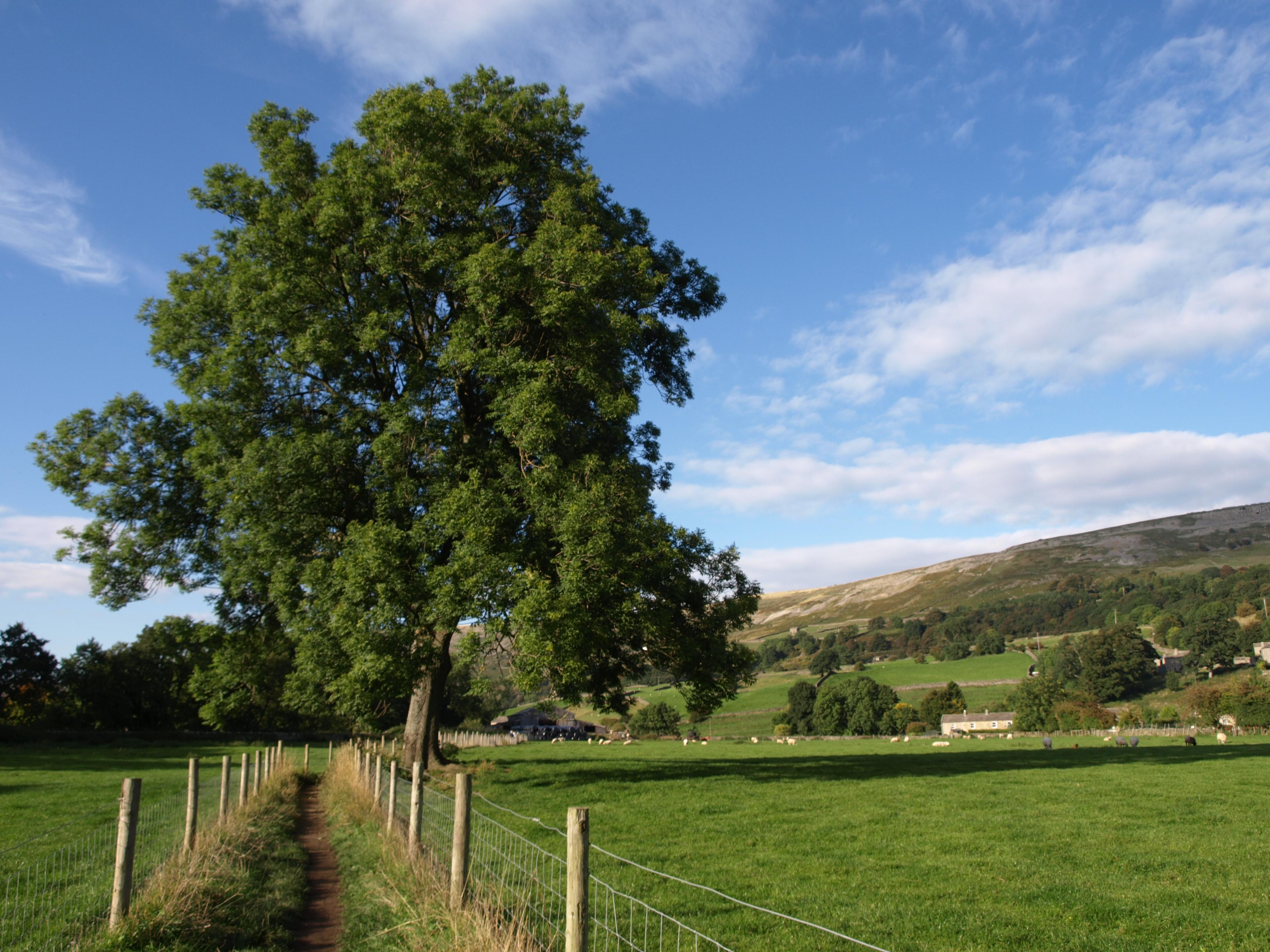 The Swaledale Valley at Reeth
