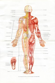 The Frequently-used Points of the Dorsal Aspect of the Human Body
